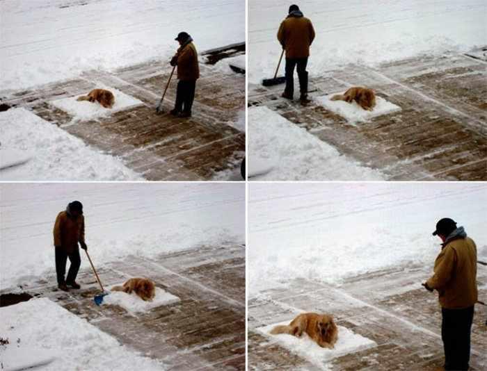 дворник и собака