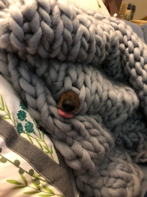 собачий нос в пледе