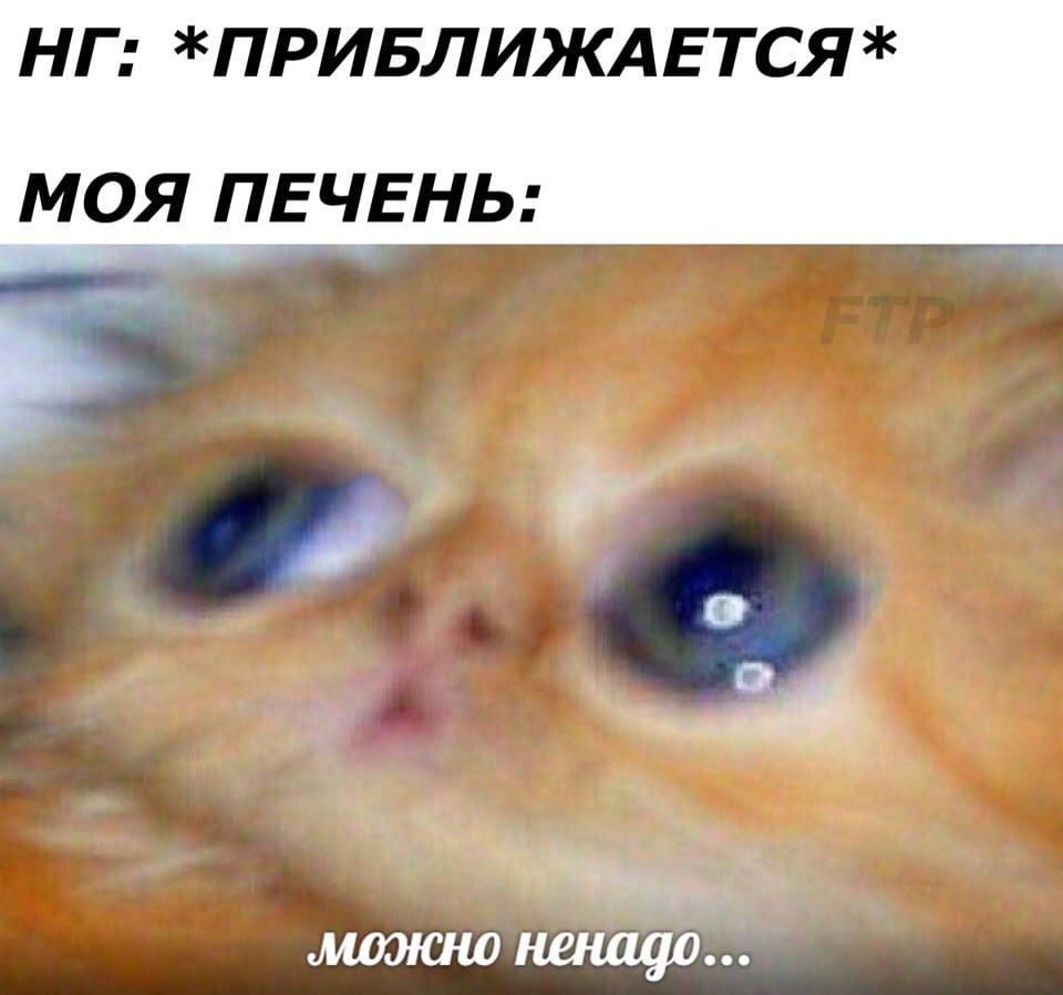 мем с рыжим котенком