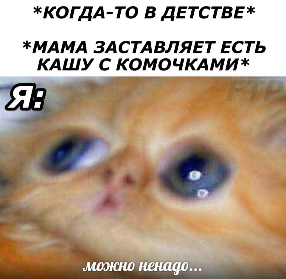 мем с котенком