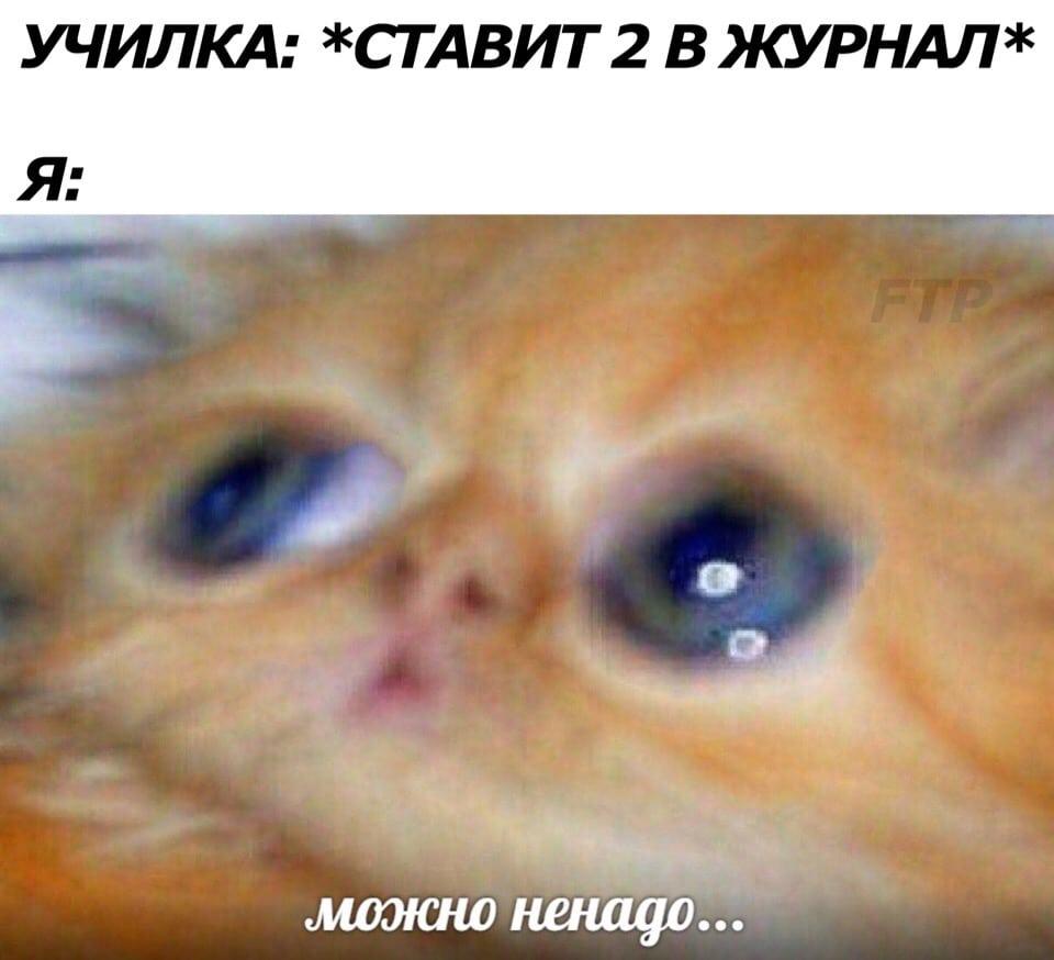 котенок мем