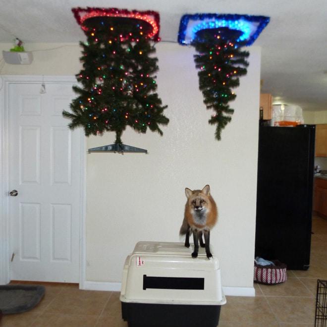 елка на потолке и лиса