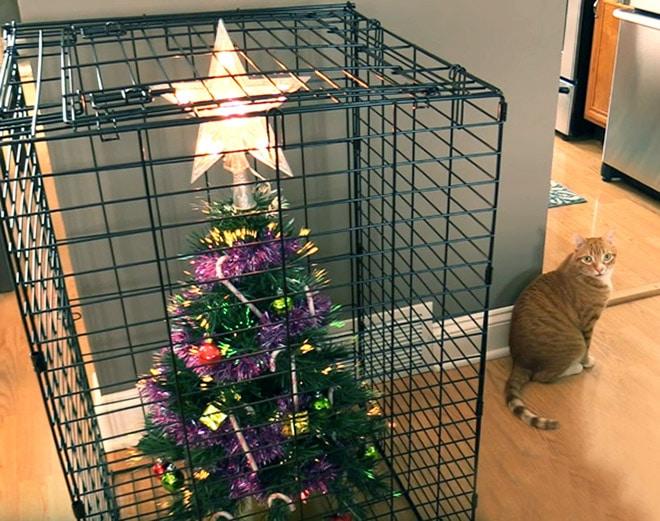 новогодняя елка в клетке