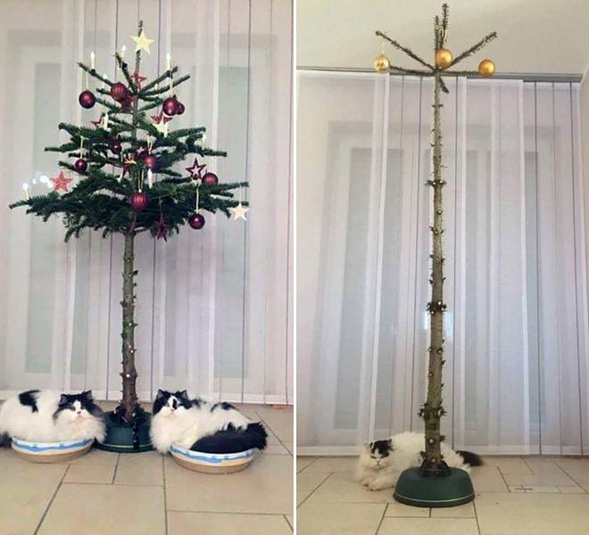 коты под елкой