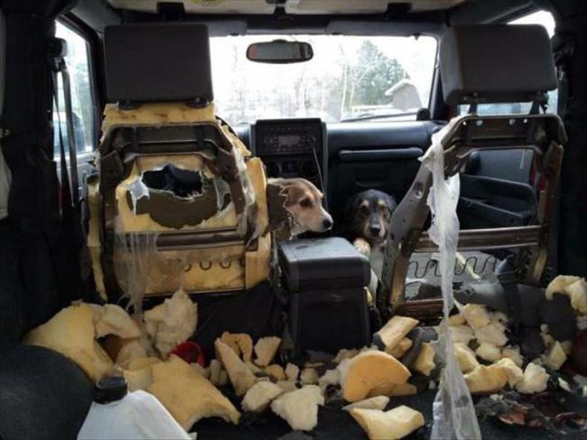 собаки сгрызли салон авто