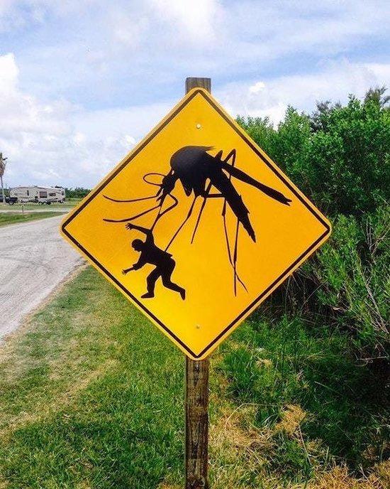 большие комары