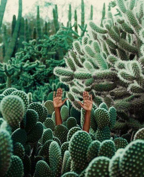 колючие кактусы