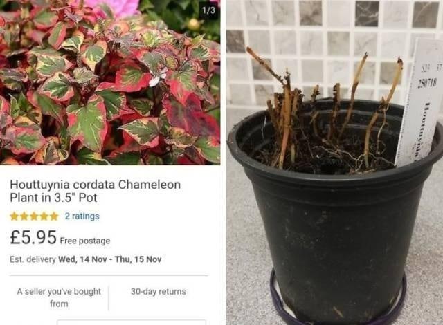 неудачная покупка растения в горшке