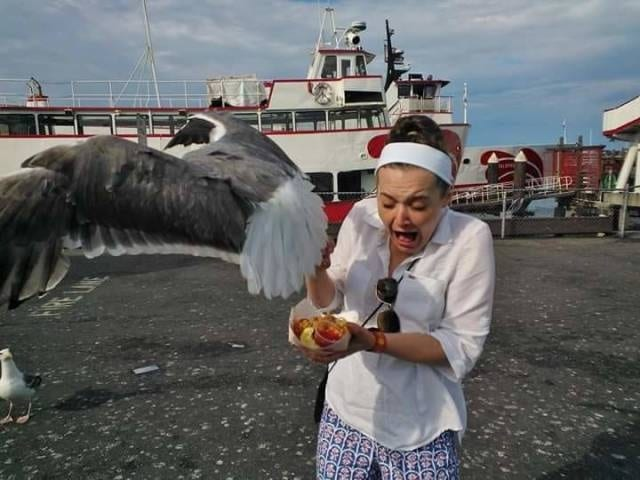 чайка украла еду у девушки