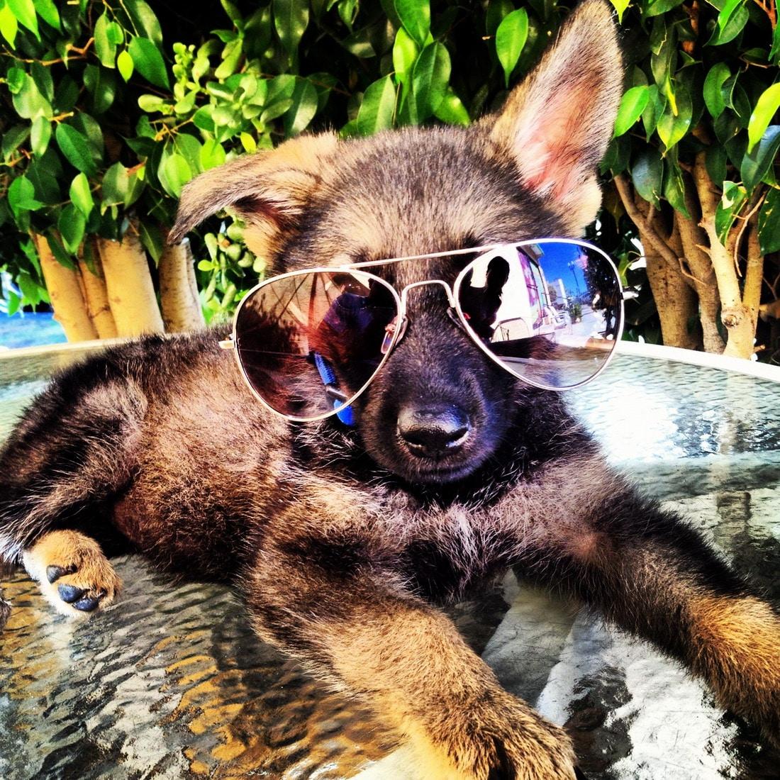 щенок в очках