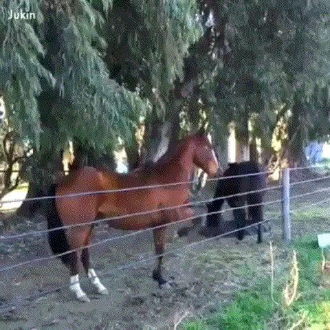 ленивая лошадь