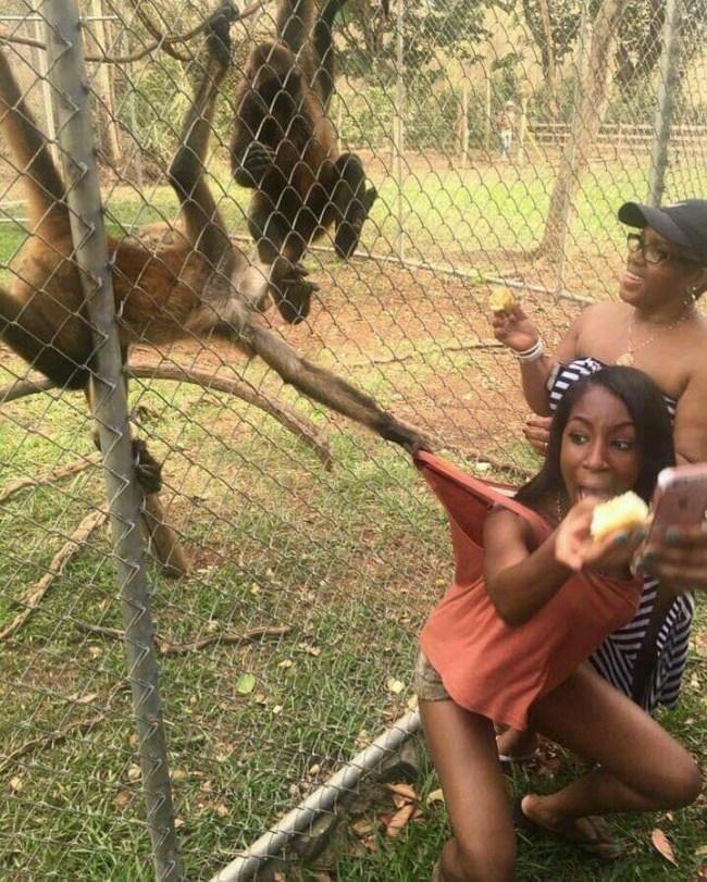 девушки и обезьяны