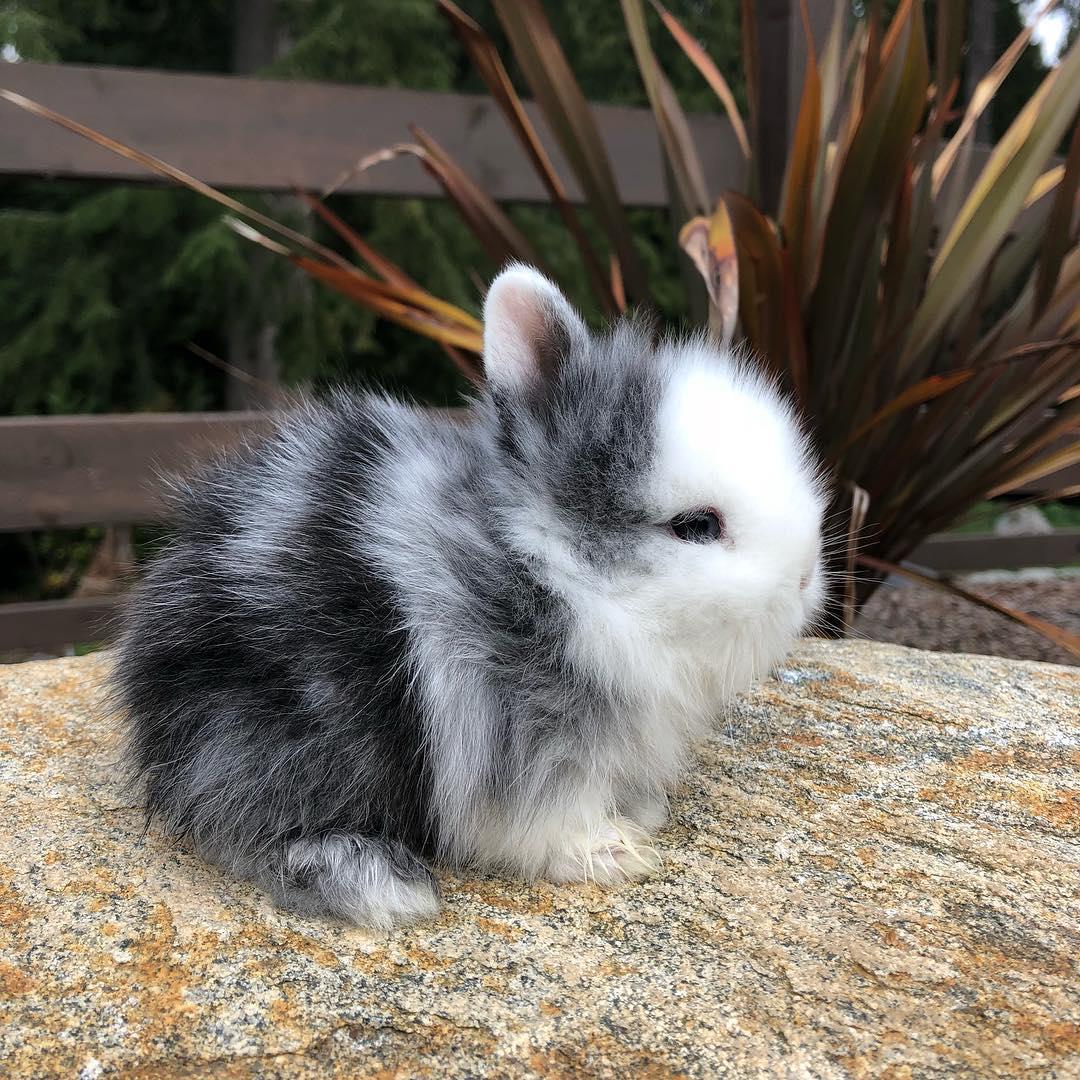 черно-белый зайчонок