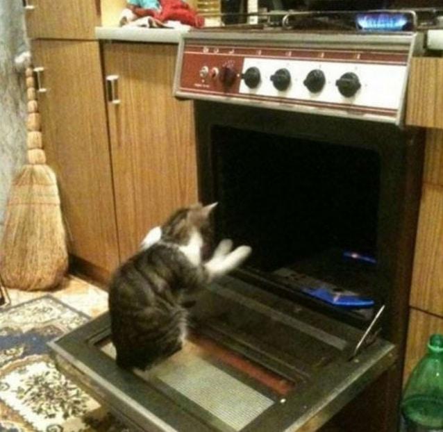 кот греет лапы возле духовки
