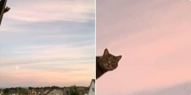 кот на фоне неба