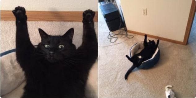 черный кот с лапами вверх