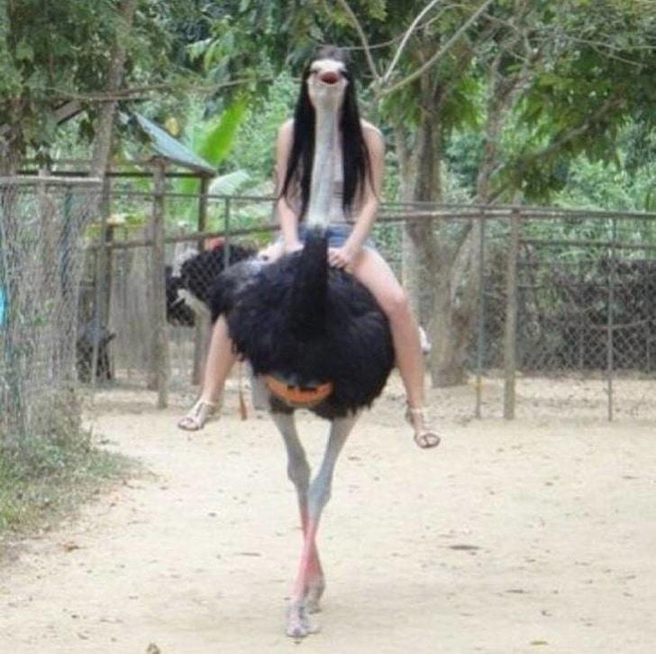 девушка верхом на страусе