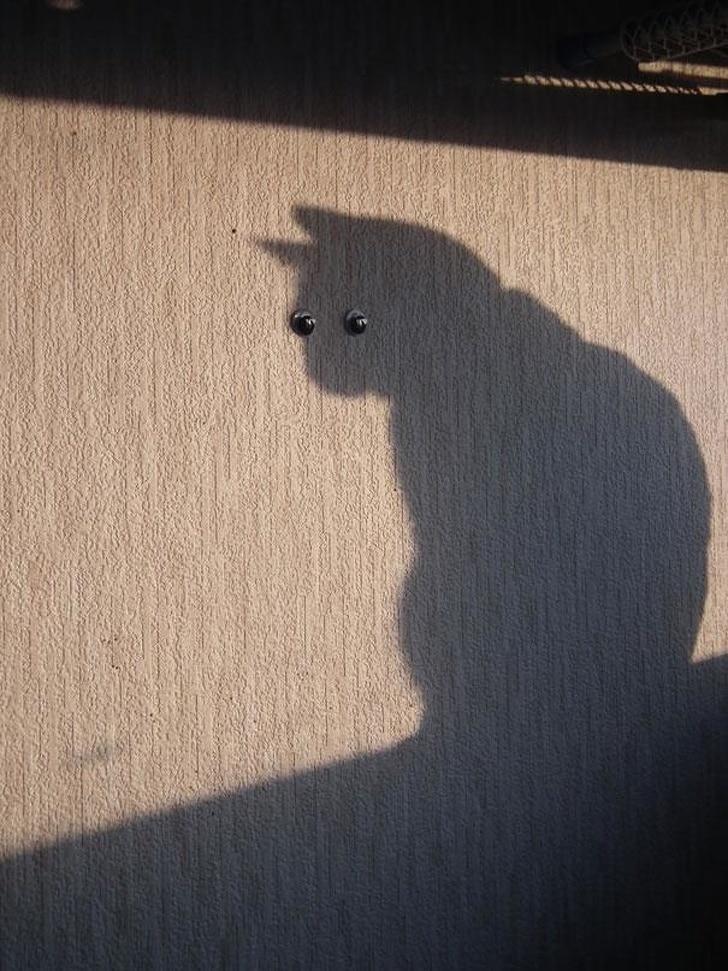 тень кота на стене