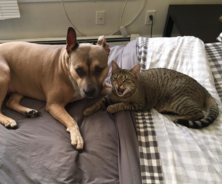 полосатый кот и собака