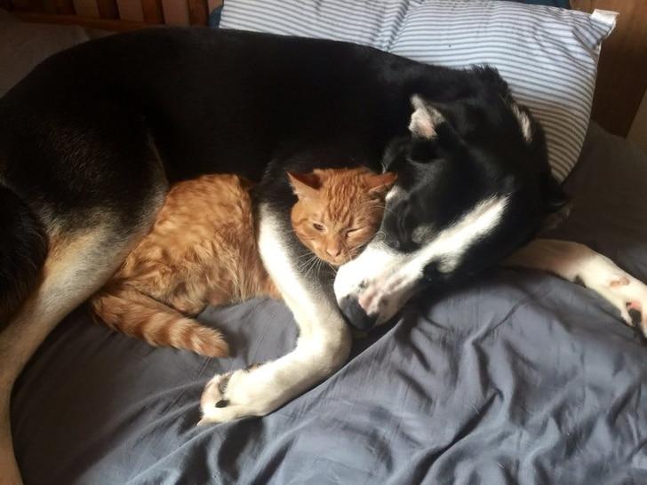рыжий кот спит рядом с собакой