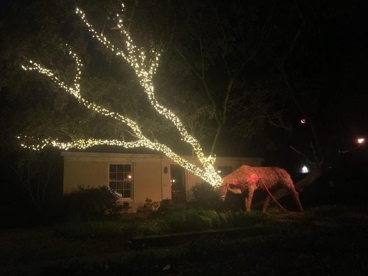 украшенное огнями дерево