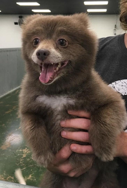 щенок похожий на медвежонка