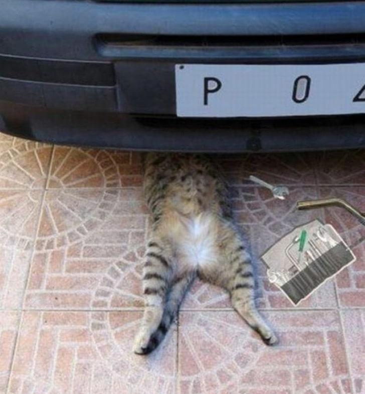 полосатая кошка под машиной