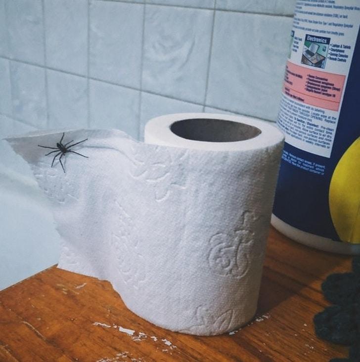 паук на бумаге