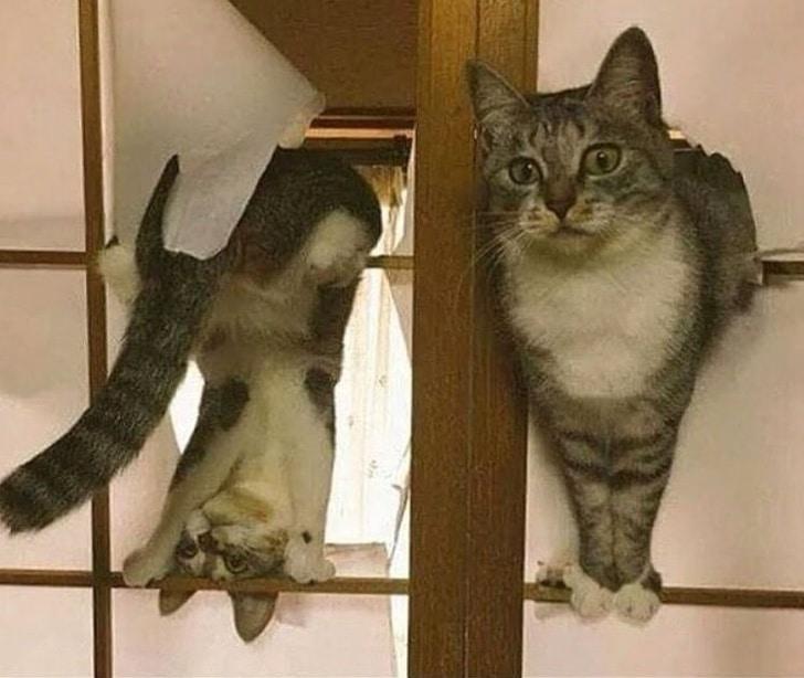 шкодливый кот