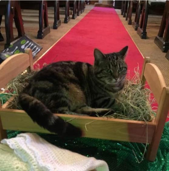 полосатый кот лежит в яслях