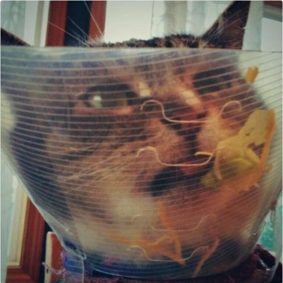 кот с воротником на шее