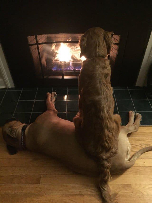 Собака сидит на собаке перед камином