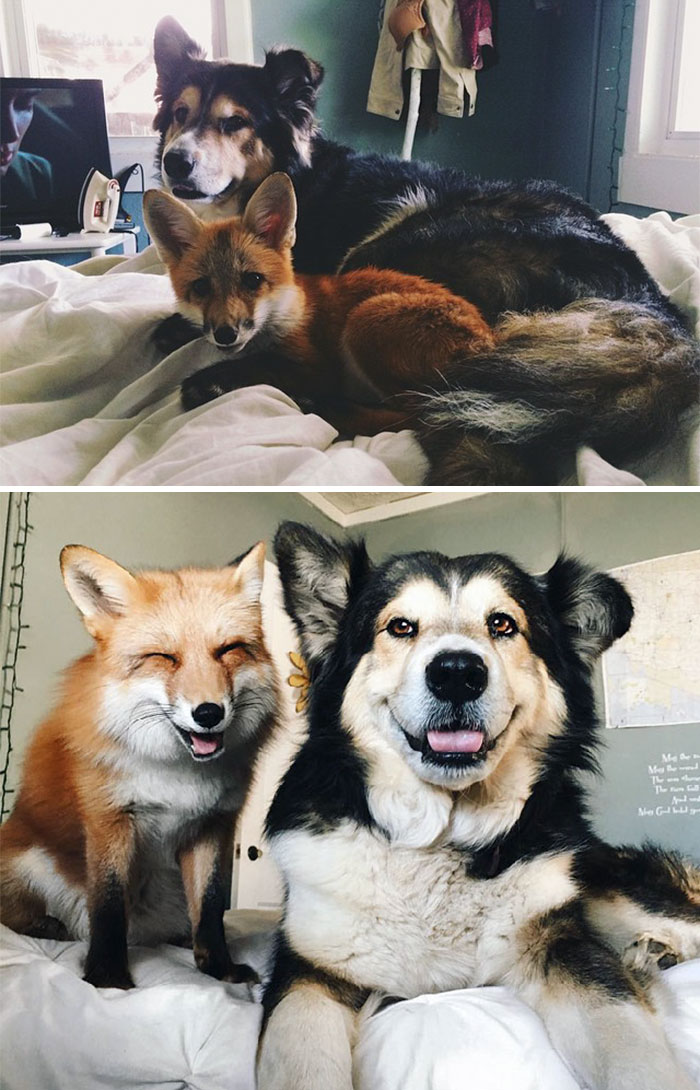 Лисенок и щенок в детстве и взрослые