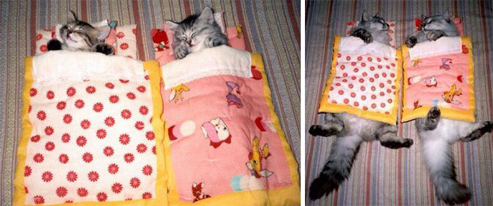 Фото котят и они же в зрелом возрасте