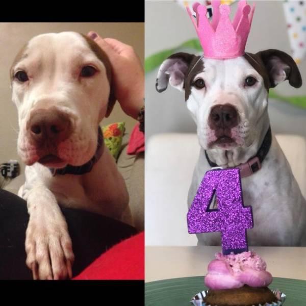 день рождения у собаки