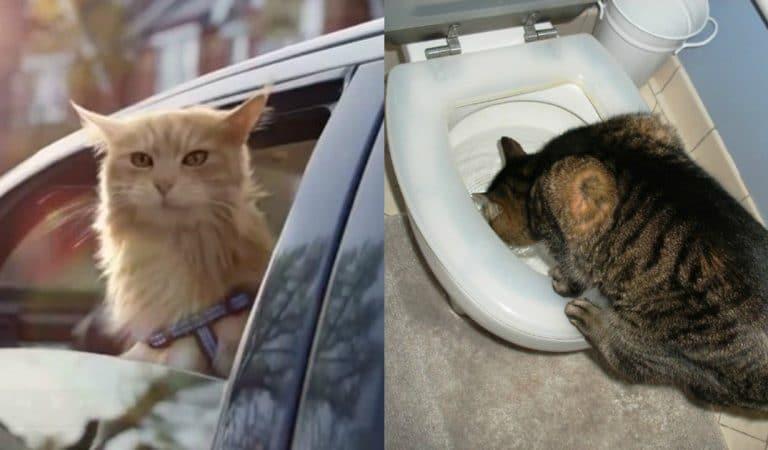 11 фото забавных котов, возомнивших себя собаками:)