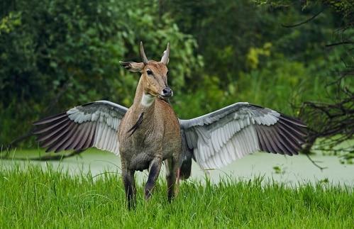 птица за спиной у оленя