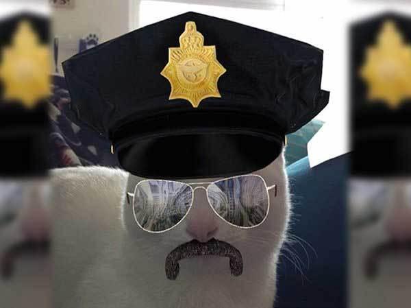 кот в очках и полицейской фуражке