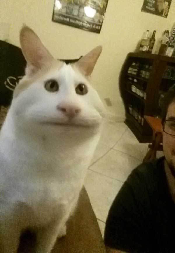 кот с вытянутой мордочкой