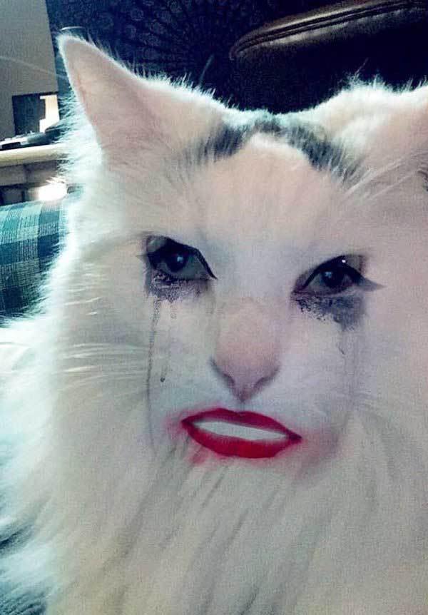 белый кот с ресницами и губами