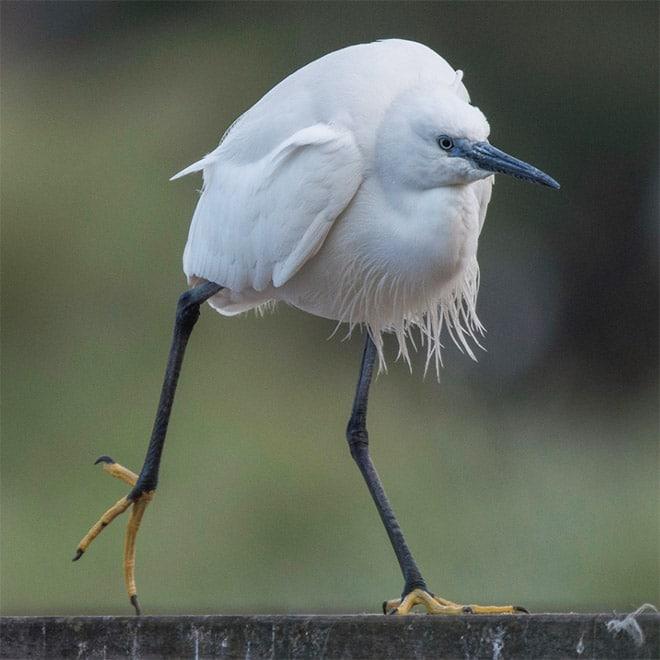 удивительная птица
