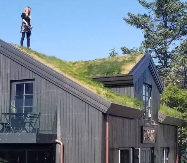 Крыша дома, заросшая травой