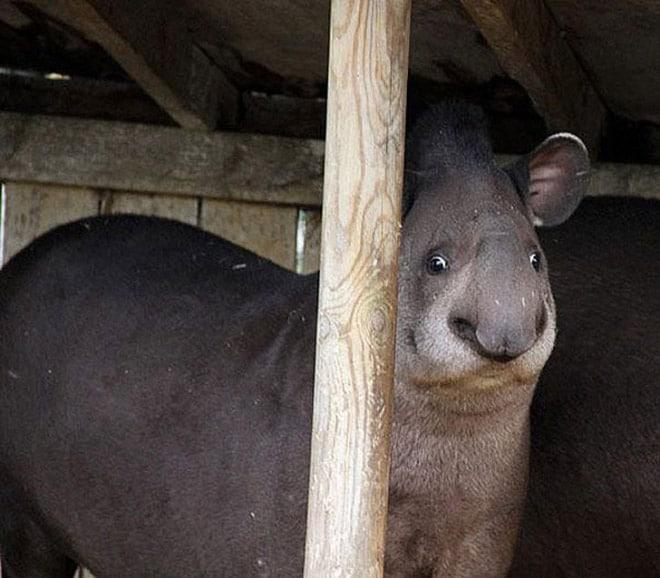 необычное животное