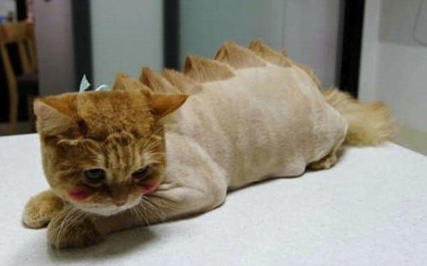 Кот со стрижкой в стиле динозавра