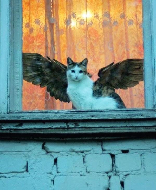 кот с крыльями