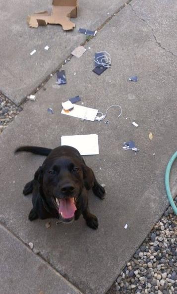 черная собака и сломанный телефон