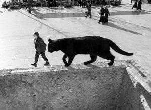 черный кот и мужчина