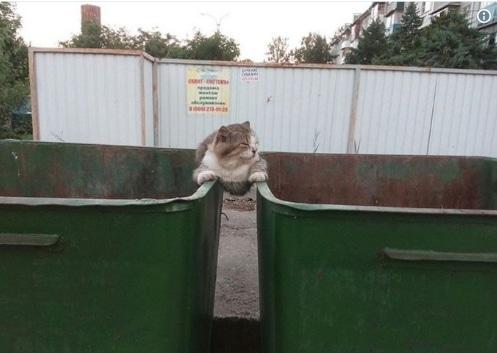 кот сидит между мусорными баками