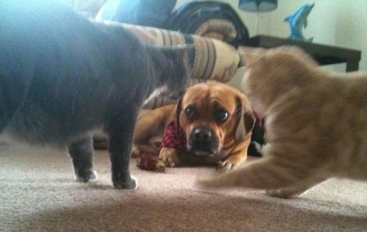 два кота и собака