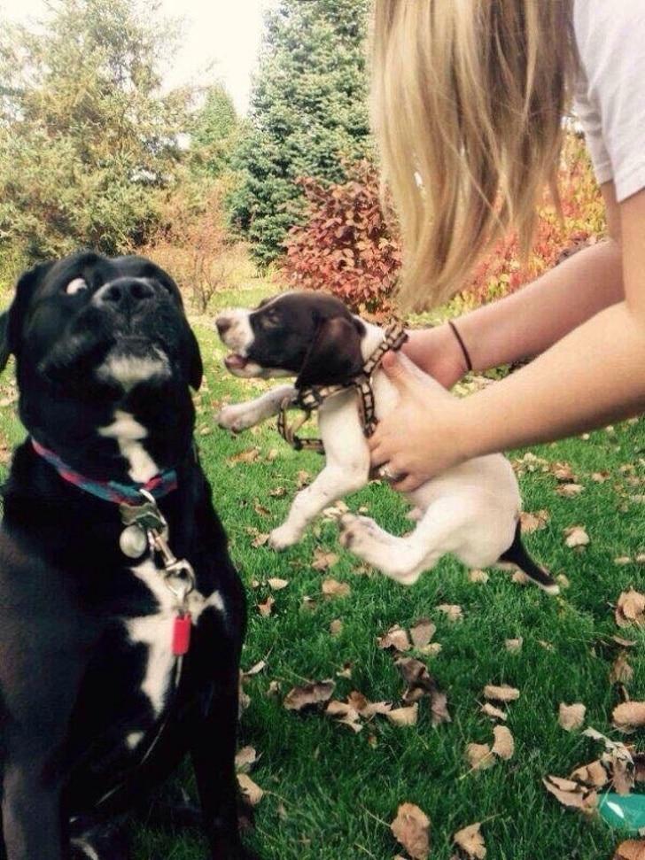 щенок и черный пес